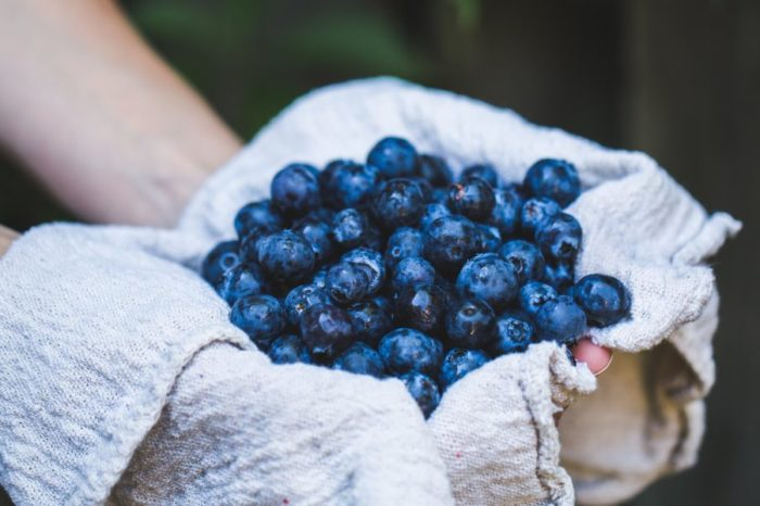 Another Good Reason to Eat Blueberries