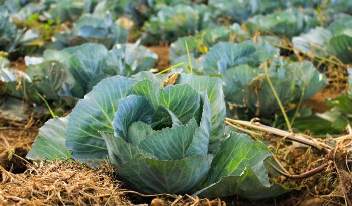 Organic Vs. Non-Organic Food