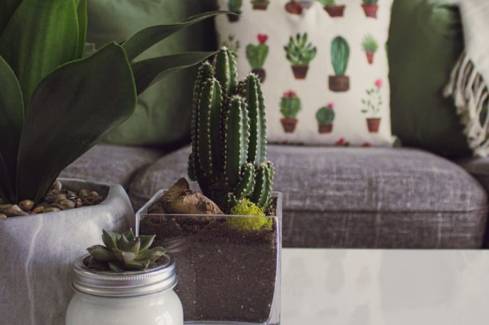 """Bringing the """"Fresh Air"""" In - The Virtues of Indoor Plants"""